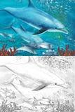 Recife de corais dos desenhos animados com golfinhos - com página da coloração Foto de Stock Royalty Free