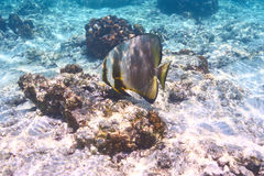 Recife de corais e peixes Fotos de Stock Royalty Free