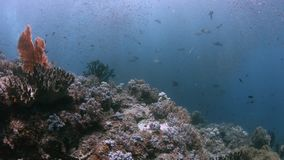 Recife de corais em Raja Ampat, Indonésia 4k video estoque