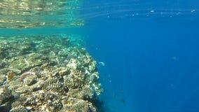 Recife de corais em uma rocha que entre profundamente na água, movimento lento video estoque