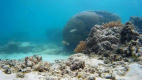 Recife de corais encantador, peixes exóticos video estoque