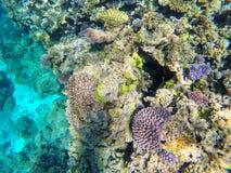 Recife de corais fora da costa Gee da ilha na lagoa de Ouvea, ilhas de lealdade, Nova Caled?nia imagens de stock