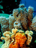 Recife de corais subaquático Fotografia de Stock Royalty Free