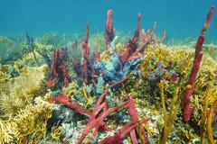 Recife de corais subaquático com esponjas coloridas Foto de Stock Royalty Free
