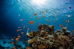 Recife de corais vívido imagens de stock