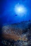 Recife de corais vermelho com peixes e fundo azul fotos de stock