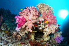 Recife de corais vibrante imagem de stock royalty free