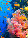 Recife do tubarão em toda sua glória! Imagem de Stock Royalty Free