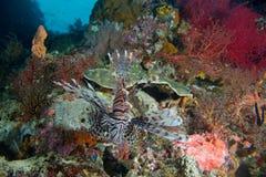 Recife dos peixes de Lon Imagem de Stock