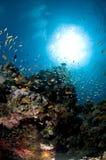 Recife e escola colorida dos peixes, Mar Vermelho, Fotos de Stock Royalty Free