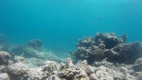 Recife indonésio surpreendente & peixes exóticos vídeos de arquivo