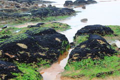 Recife preto Fotografia de Stock