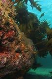 Recife rochoso com alga Fotos de Stock Royalty Free