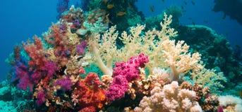Recife subaquático colorido com coral e esponjas Fotografia de Stock Royalty Free