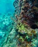 Recife tropical e mar azul esverdeado Foto de Stock Royalty Free