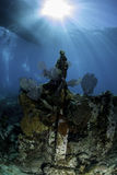 Recifes corais norte-americanos Fotografia de Stock