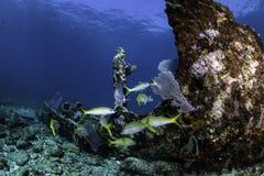 Recifes corais norte-americanos Foto de Stock Royalty Free