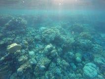 Recifes de corais imagem de stock