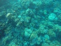 Recifes de corais fotografia de stock