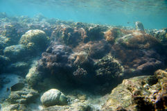 Recifes de corais Foto de Stock Royalty Free