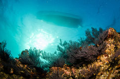 Recifes de corais do mar do cortez, México imagem de stock royalty free
