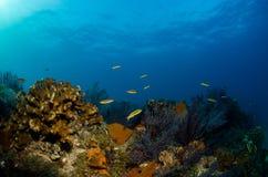 Recifes de corais do mar do cortez, México fotos de stock royalty free