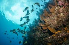 Recifes de corais do mar do cortez, México fotografia de stock
