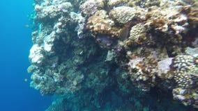 Recifes de corais perto do furo azul vídeos de arquivo
