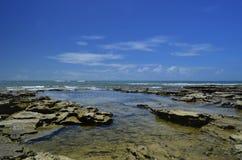 Recifes de korall ingen Atlântico na Bahia arkivbild