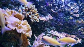 Recifes subaquáticos e para pescar a natação no aquário video estoque