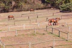 Recinti chiusi del campo dei cavallini del cavallo Immagini Stock Libere da Diritti