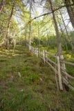 Recinti dentro una foresta tipica delle alpi italiane Immagini Stock