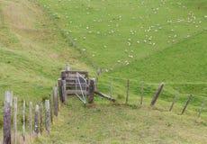 Recinti il campo e la vista della montagna e dell'allevamento di pecore Immagini Stock Libere da Diritti