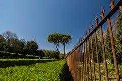 Recinto arrugginito del metallo e cespugli sistemati nei giardini di Boboli, Firenze Fotografie Stock Libere da Diritti