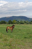 Recinto chiuso del cavallo Fotografia Stock