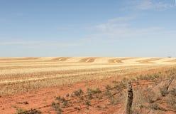 Recinto chiuso raccolto del grano, Australia Immagini Stock