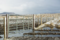 Recinto degli animali da allevamento Immagini Stock Libere da Diritti