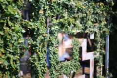 Recinto del ferro di stile cinese, alberi naturali nel giardino immagine stock libera da diritti