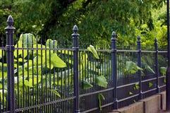 Recinto del giardino fatto di ferro nel nero immagine stock libera da diritti