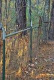 Recinto della foresta Immagine Stock Libera da Diritti