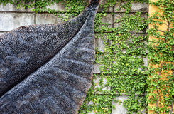Recinto della parete dell'edera Immagine Stock