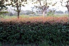 Recinto della pianta Fotografia Stock
