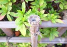 Recinto di bambù con la pianta verde nel Giappone Fotografia Stock