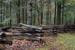 Recinto di ferrovia spaccata con muschio, allevato su sulle rocce, con la foresta dietro Immagine Stock Libera da Diritti