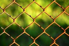 Recinto di filo metallico con verde nel fondo Fotografie Stock