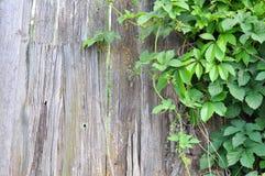 Recinto di legno e pianta verde Immagine Stock