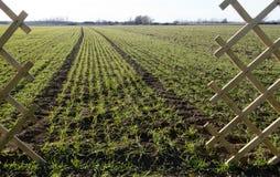 recinto e campo con cereali vernini ed i solchi Immagine Stock Libera da Diritti