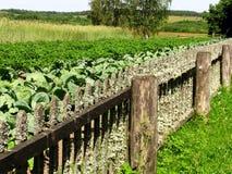 Agricoltura di camion Fotografia Stock