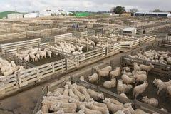 Recinto per il bestiame Fotografia Stock Libera da Diritti