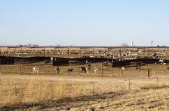 Recinto per il bestiame del bestiame Fotografia Stock Libera da Diritti